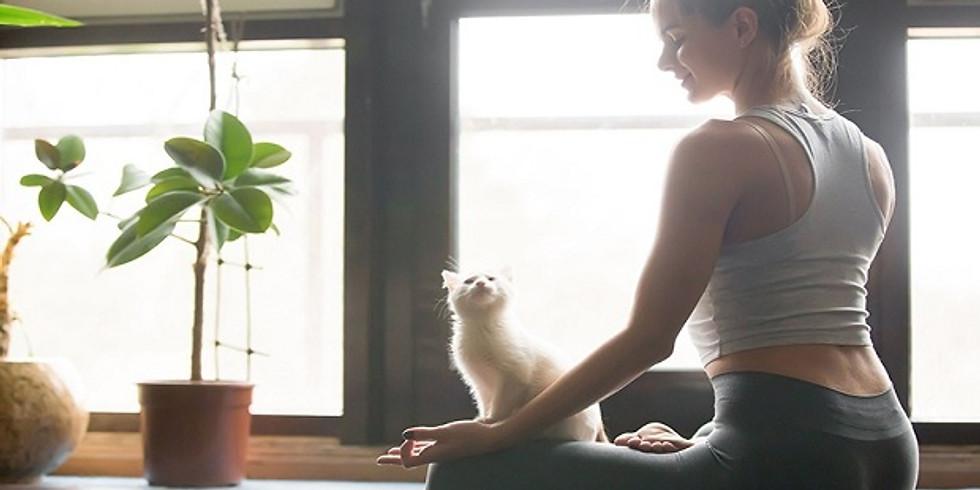 Онлайн медитация