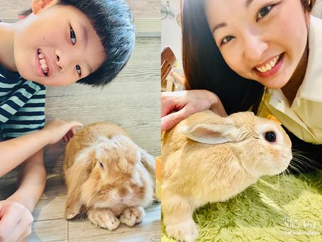 銅鑼灣 Rabbitland Cafe 跟小兔玩