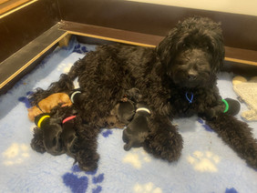 Betty and her 8 beautiful babies