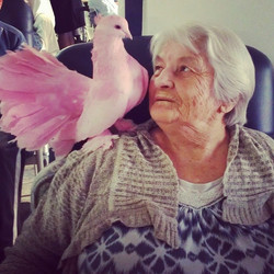 The nursing home had a visit from Kris's feathered friends.jpg My grandmother with _Dolly_, a dyed p