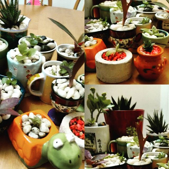 Check out my new #succulent additions to the family _)