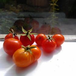 Siamese tomato.jpg.jpg