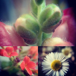 Having fun with my clip on #macro #lens #plants