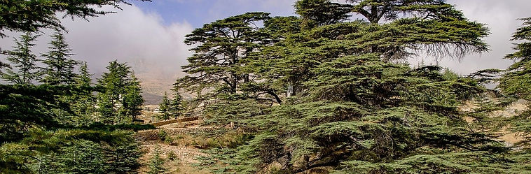 Libanon_zedern_slider_Pixabay_kein_Bildn