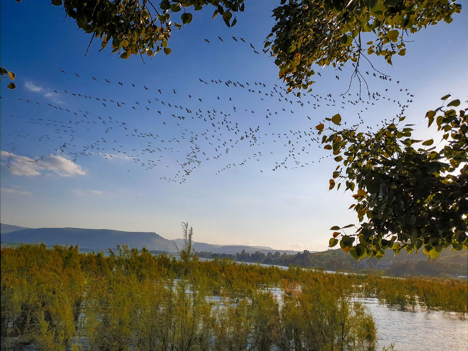 Vogelschwarm über dem See Gennesaret