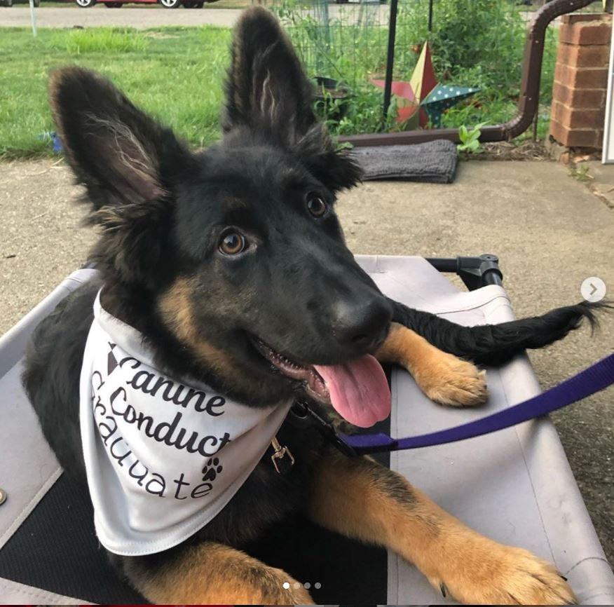 Private Training - 3 Week Puppy Package