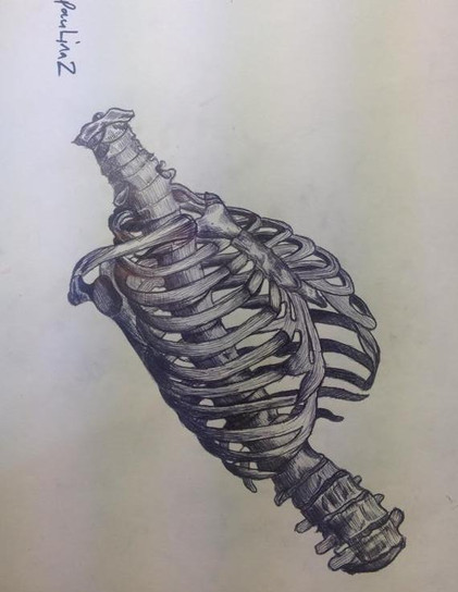 Human ribcage pen drawing