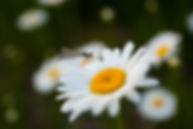 GBC_Sun July 7_38.jpg
