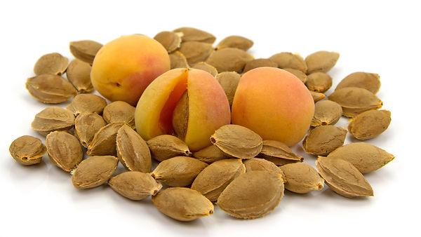 Aprikosekern.jpg