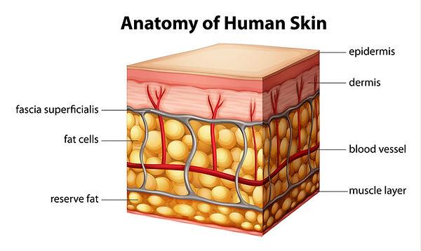 Human Skin.jpg