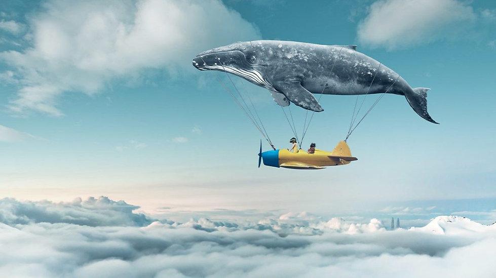 Whale_Airplane_Clouds_1296x728-header-12