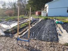 Spring 2020 prepping garden