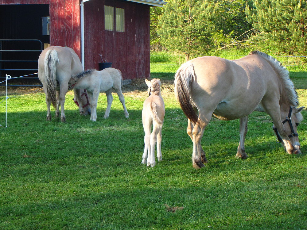 5,2016 bad baby Merry and farm 031