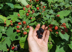 Berry Season Wrapping Up