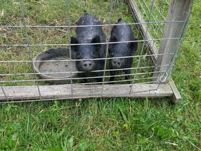 New Farm Animals!