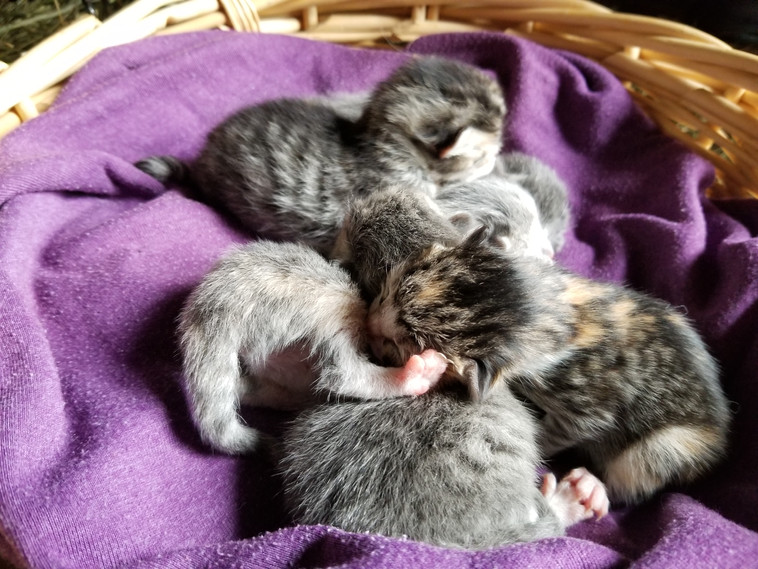 baby pile up