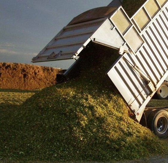 Silage Feature Dump 2