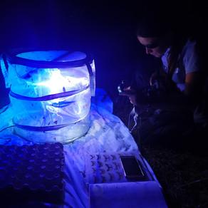 Bilan de la soirée d'inventaire des papillons nocturnes