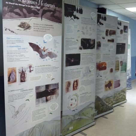 Exposition « Les Voltigeuses nocturnes : à la découverte d'un monde renversant »