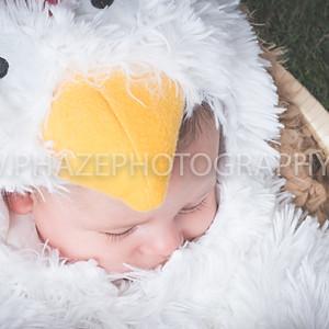 wacky halloween mini shoots Baby Chicken