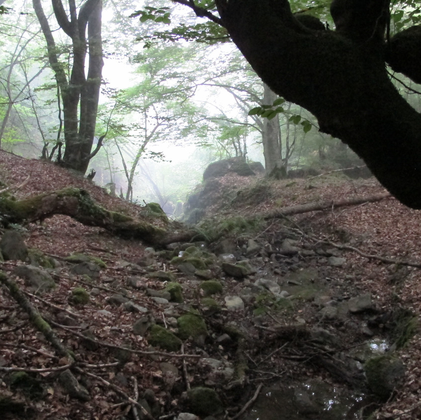 The beech forests behind Olmares in the early morning mist.