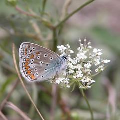 butterfly Jamie Cooper.jpg