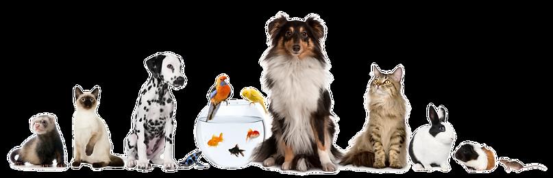 kisspng-pet-sitting-dog-cat-domestic-rab