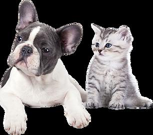 kisspng-cat-dog-veterinarian-pet-cliniqu