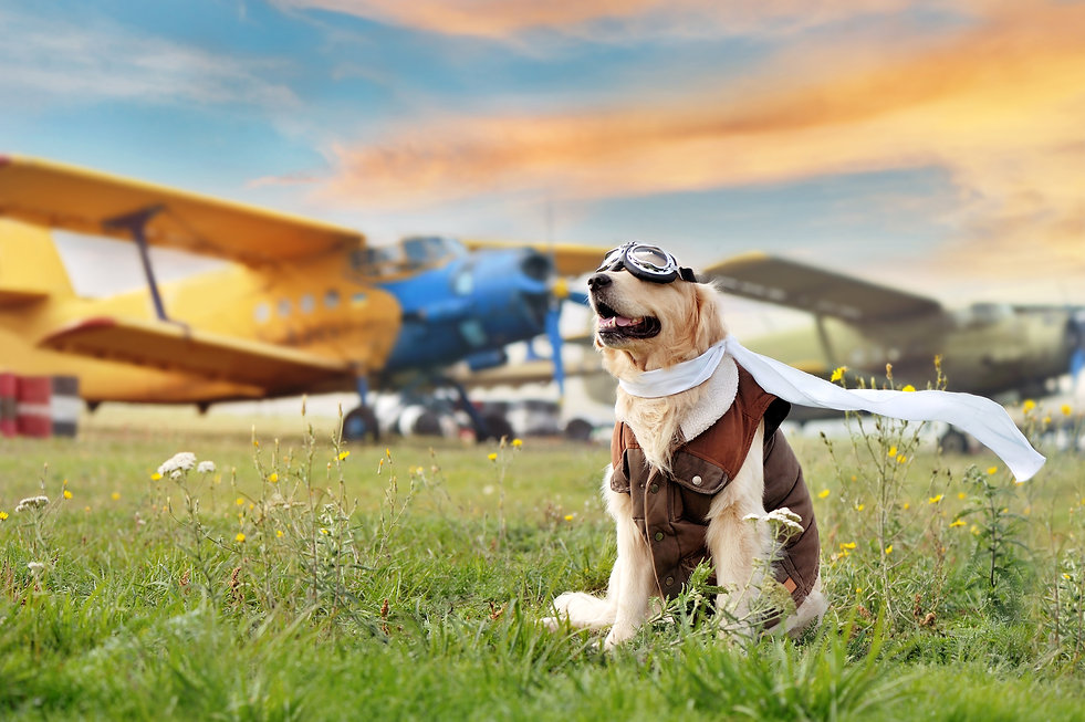 Sitting dog wearing aviator goggles at t