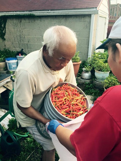 Bagging peppers