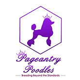Pageantry Poodles Logo.jfif