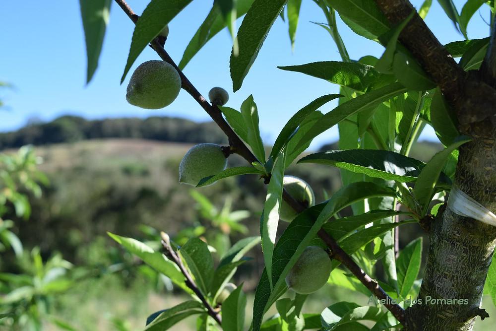 Frutinho de pêssego