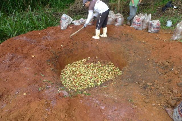 Fruta enterrada