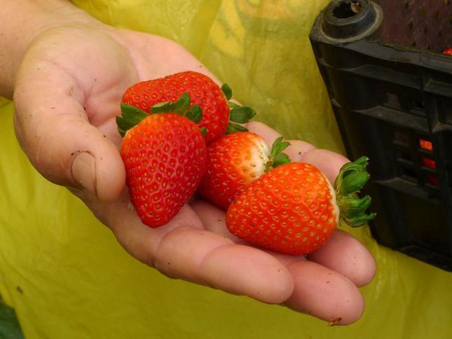 Fruta seca como Alimento Dietético