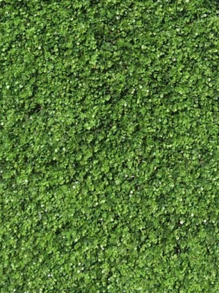 green%20wall_edited.jpg