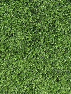 green%20wall_edited.jpg