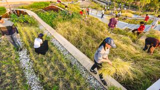 See Asia's largest organic rooftop farm — located in busy Bangkok