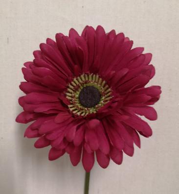 fuchsia daisy