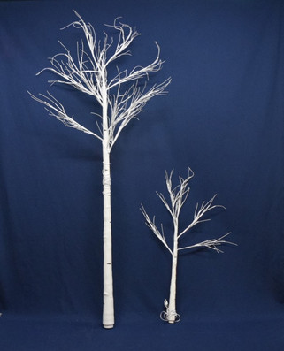 white birch trees with lights