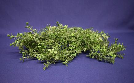 seaweed greenery