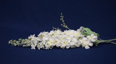 white lupins