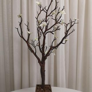 brown manzanita tree