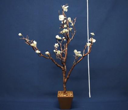 manzanilla tree