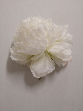 white peonie