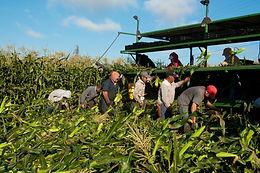 Nuevo país, misma opresión: Es hora de reforzar los derechos de los trabajadores agrícolas