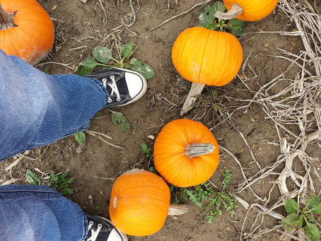 5 Reasons Fall is the Favorite Time for Varicose Vein Treatment