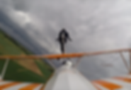 Farm or Flight.PNG