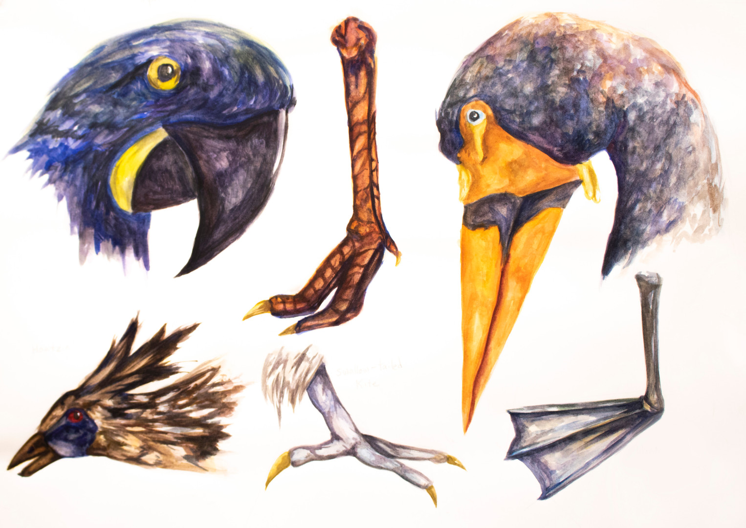Natural History Illustration