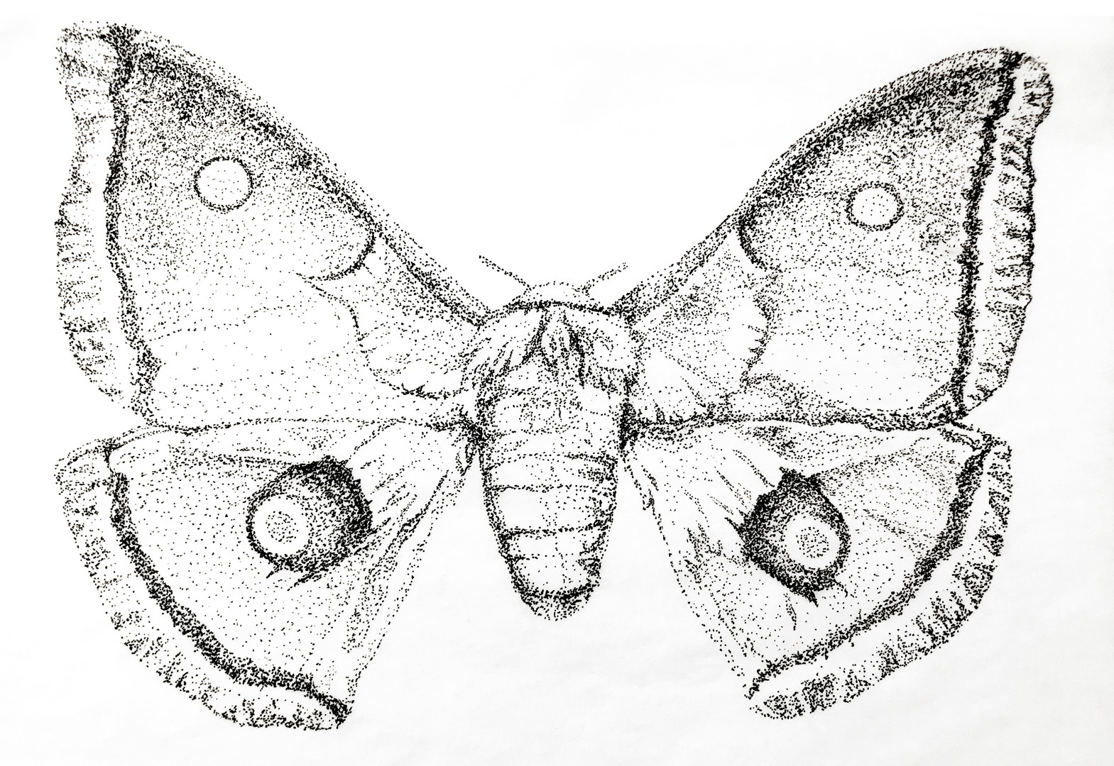 Moth (Unknown)