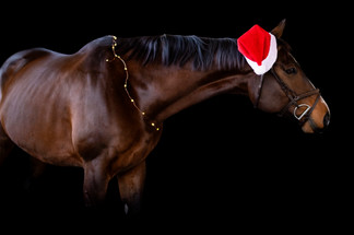 santa hat and lighteditw.jpg